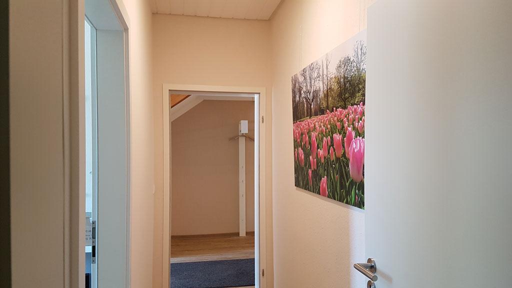 Tulpen, Rotterdam